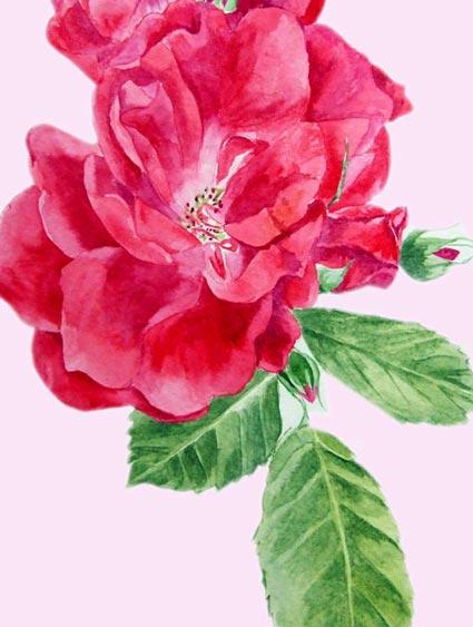 Melanie Chan - Rose1