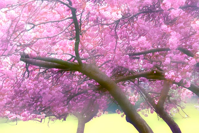 Healing Words, Blossom - Gil Dekel