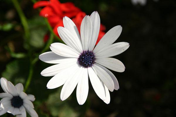 Flowers2 - Gil Dekel
