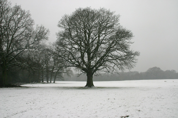 Tree in White, Nature - Photo by Gil Dekel.