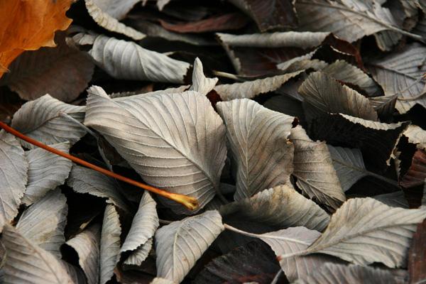 Crispy Leaves, Nature - Photo by Gil Dekel.