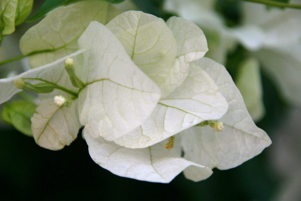 White Leaves, Nature - Photo by Gil Dekel.