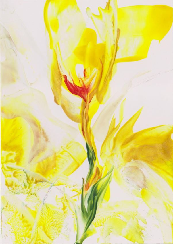 Yellow Rose - by (c) Natalie and Yael Dekel, May 2012.