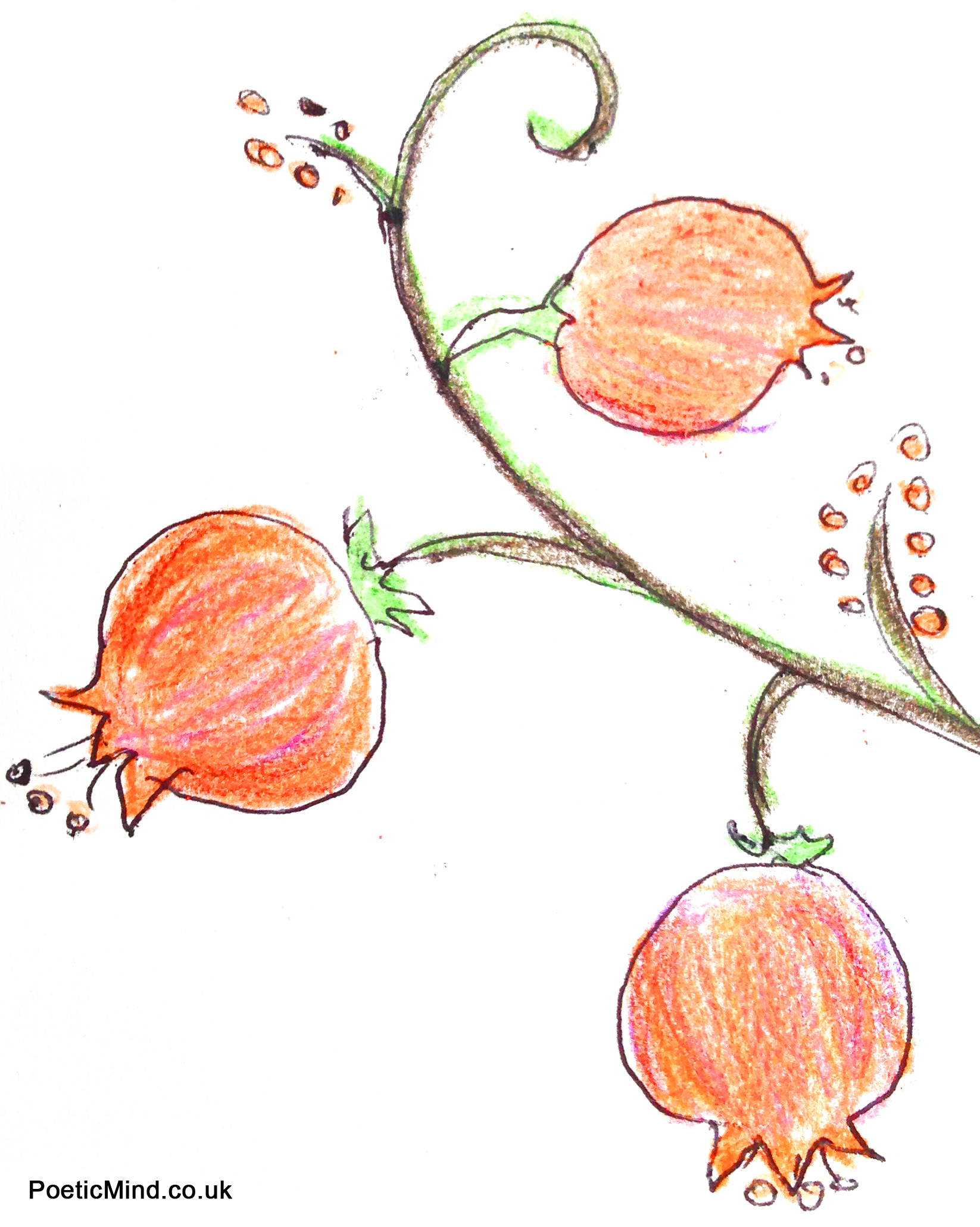 A pomegranate's abundant seeds symbolises creation, abundance, and a hope that our lives will be fruitful with good deeds. Illustration by Natalie and Gil Dekel.