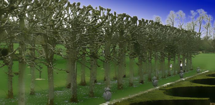 Valley-Tree-Life - Gil-Dekel