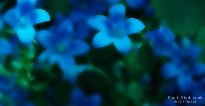 Petals-Kissing-Pasts-Gil-Dekel